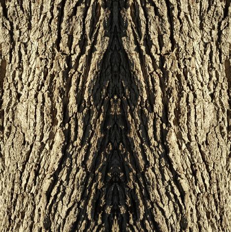 Tree Bark fabric by magicmamahandmade on Spoonflower - custom fabric