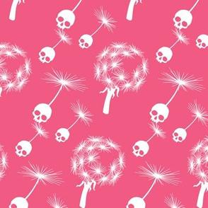 Skull Dandelion Seeds Pink