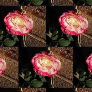 Rose Blooms on Chocolate Bricks (Ref. 0845)