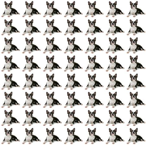 Boston Terrier Dog fabric by weebeastiecreations on Spoonflower - custom fabric