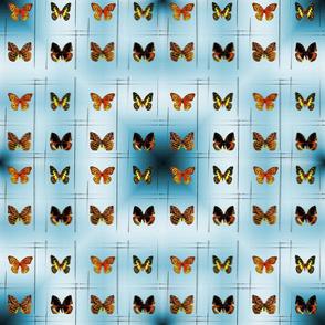 Butterflies Lines