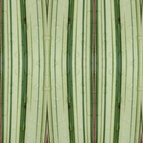 NZ flax stripy