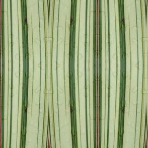 NZ flax stripy