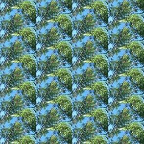 Leafy Eucalyptus Canopy (Ref. 1734a)