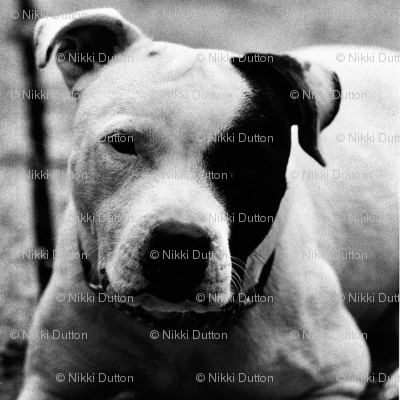 Staffie cushion front - Pippa
