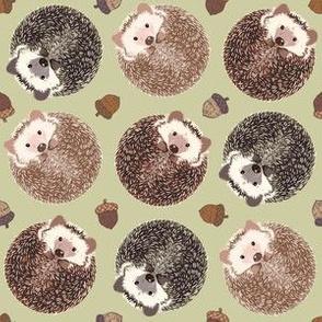 Hedgehog Scatter sage