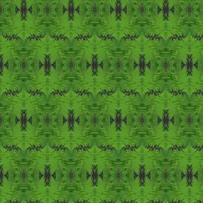 Bed of Ferns
