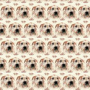 shaggy_dog_orig-ed