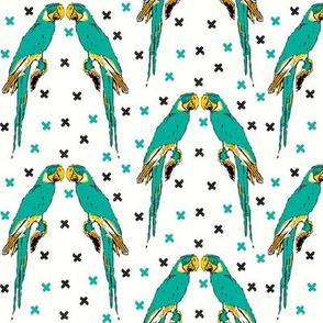 Parrots turquoise x's