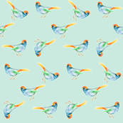 SongBird Blue & Orange on Seafoam