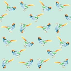 SongBird Blue & Orange on Seafoam