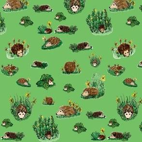 hedgehog green