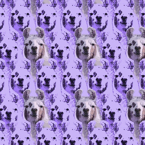 Llama faces - purple