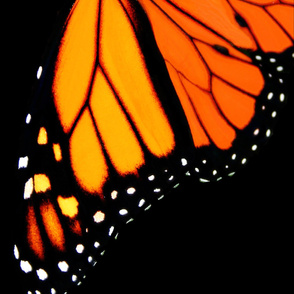 Monarch Butterfly Skirt Panel Adult Size