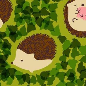 Hedgehogs in Hedges