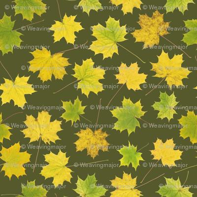 small maple leaves on bracken green