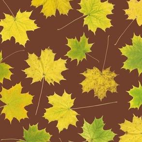yellow maple leaves on mahogany
