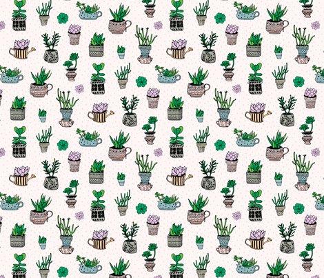 Rsucculent_garden_shop_preview