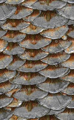 Salmon Scales