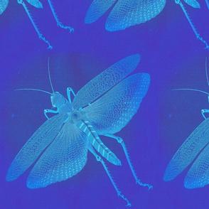 NW_grasshopper_19_s6