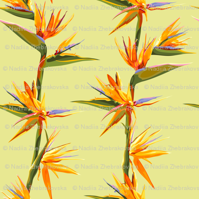 seamless_patter_of_strelitzia_flowers_on_a_bench_with_leaves
