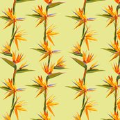 Rseamless_patter_of_strelitzia_flowers_on_a_bench_with_leaves_shop_thumb
