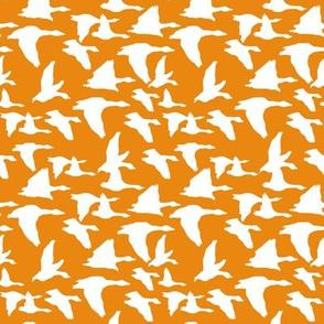 birds in flight orange