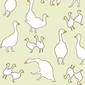 birds lighter sage