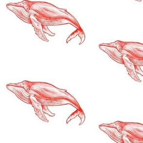 Red Whales