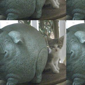 Ewok a new member