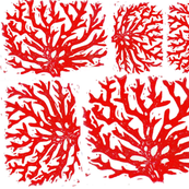 red coral reef