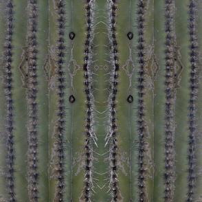 Cactus Ribs 1