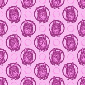 Collared Swedish Vallhund portraits - pink
