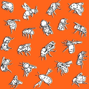 Bombus lapidarius Orange