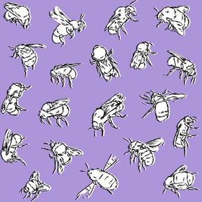 Bombus lapidarius Purple
