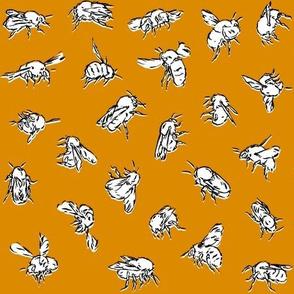 Bombus pascuorum Orange