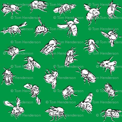 Bombus pascuorum Green