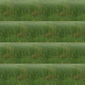Rippling Fields of Green Pasture - Medium Scale Horizontal Stripes (Ref. 3675)