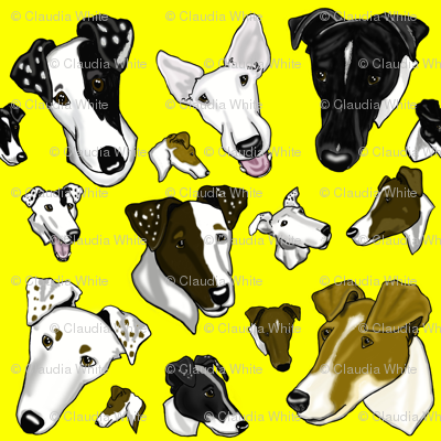 Smooth Fox Terriers-yellow