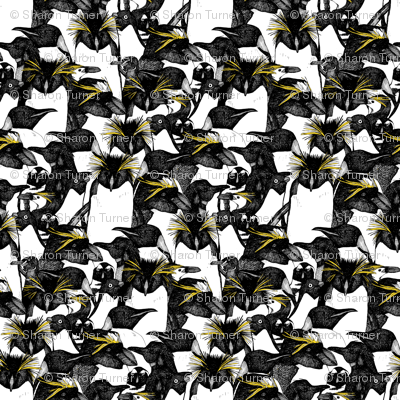 just penguins black white yellow