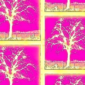 Garry Oak  Tree - pink and yellow