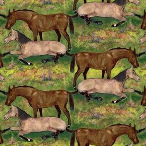 Brown and Buckskin Horses