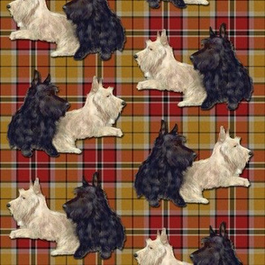 Bertie and Willie Scotties on Plaid