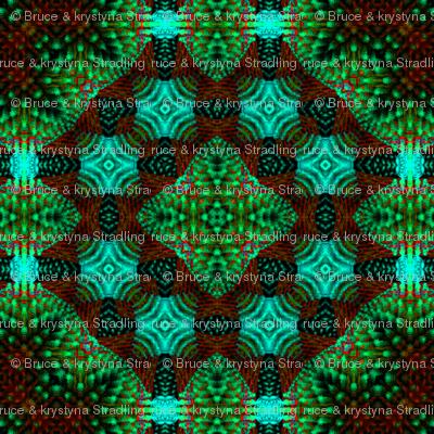 Cactusin 19