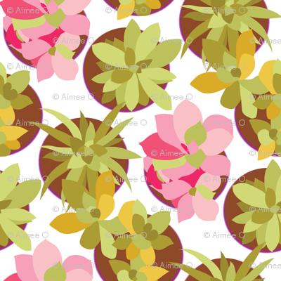 Succulents Abound Fiesta