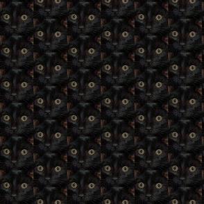 Blackie Cat!