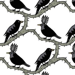 thorn birds black grey