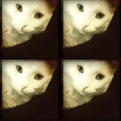 Kitty Cat Black & White Tiles