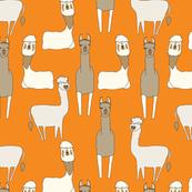 Llama Fun!!!