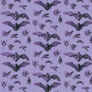 vintage bats purple